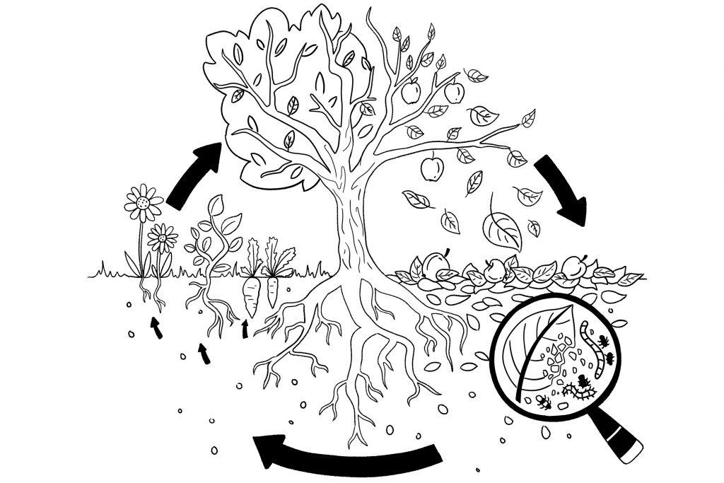 Zeichnung des Naturkreislaufs