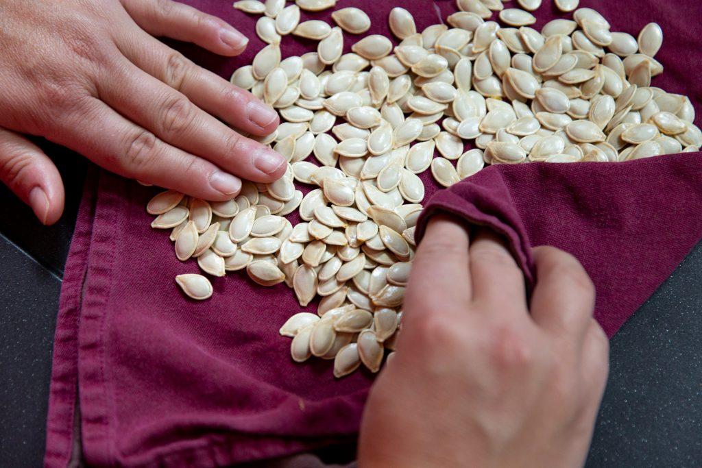 Hände wickeln Kürbiskerne in Küchentuch