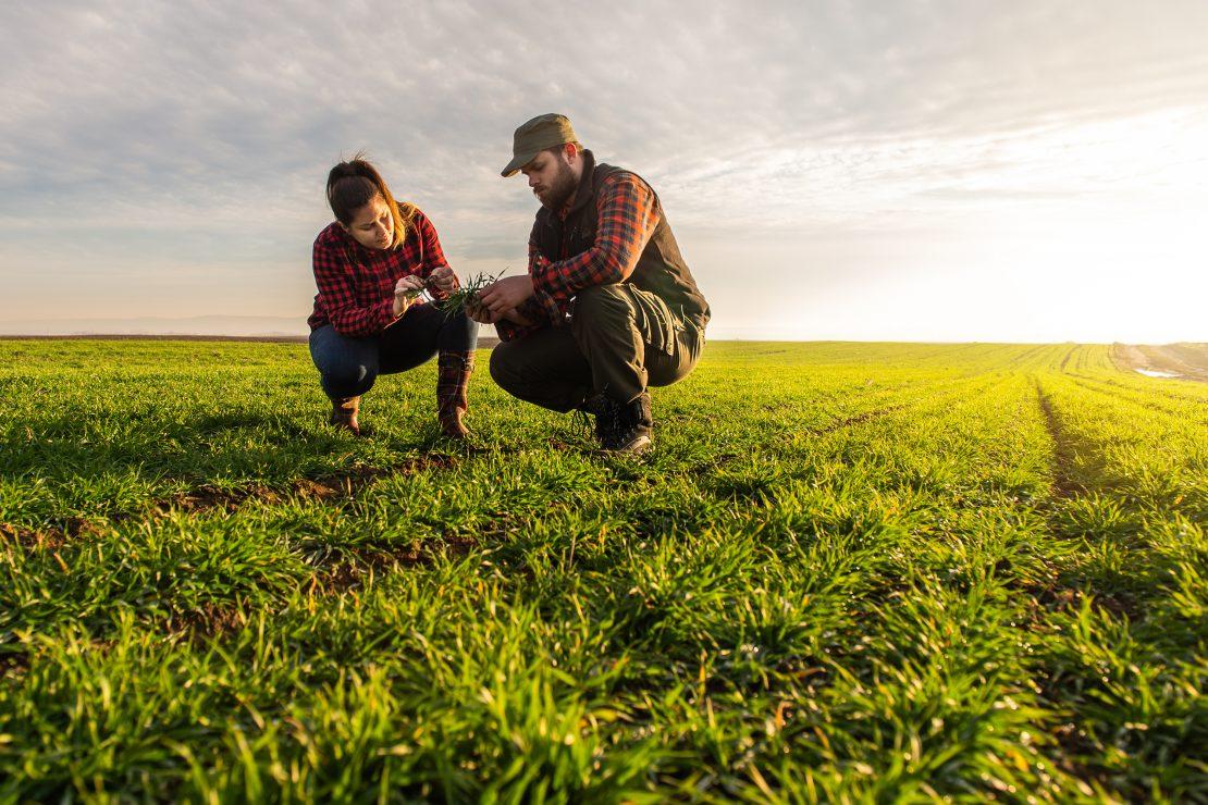 Frau und Mann auf Feld hockend