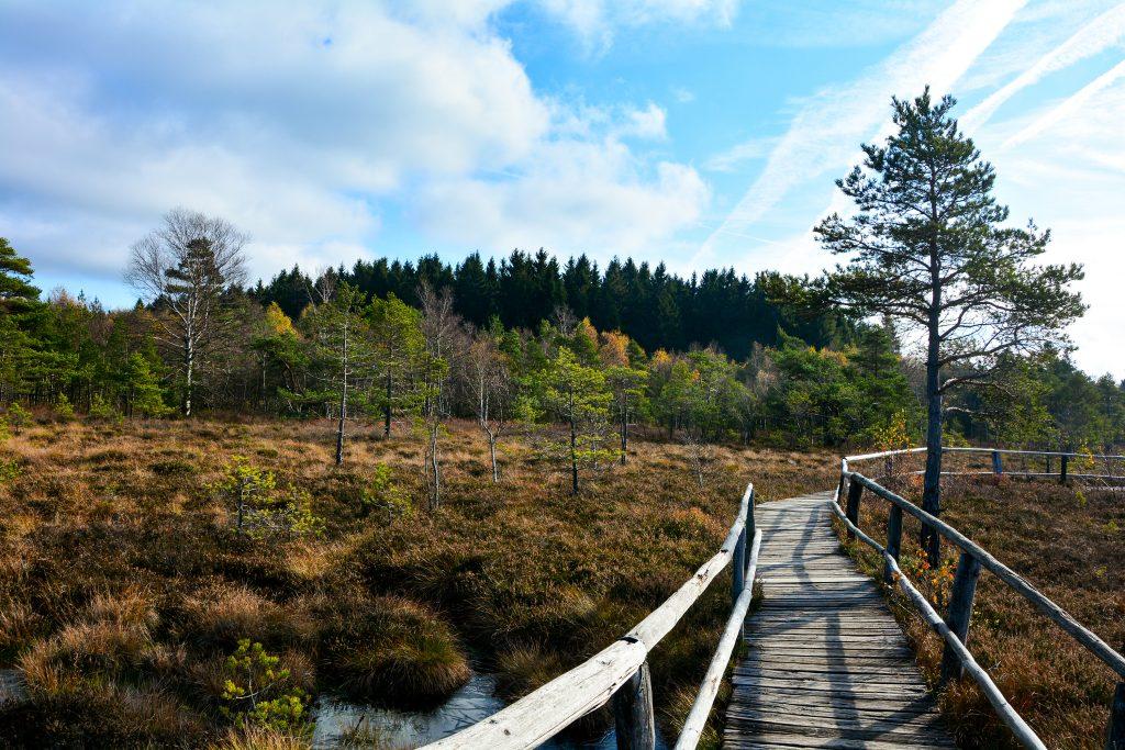 Moorgebiet mit Holzweg vor Wald